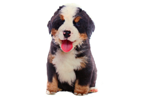 Polštářek 36 x 20 cm salašnický pes