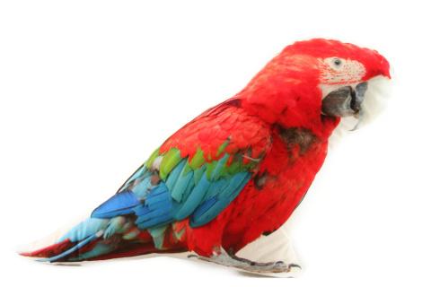 Polštářek 25 x 28 cm papoušek